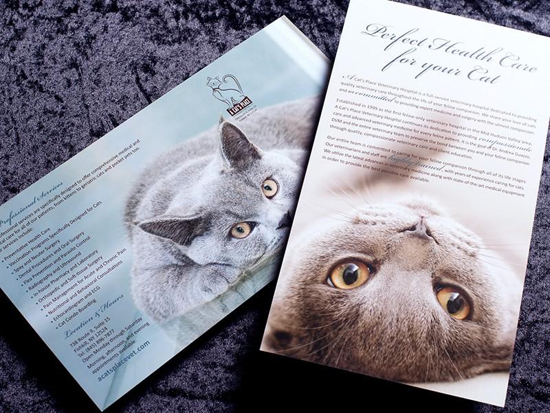 A Cat's Place Brochure